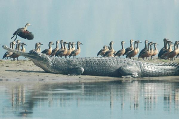 No crocs have escaped from croc park authorities clarify