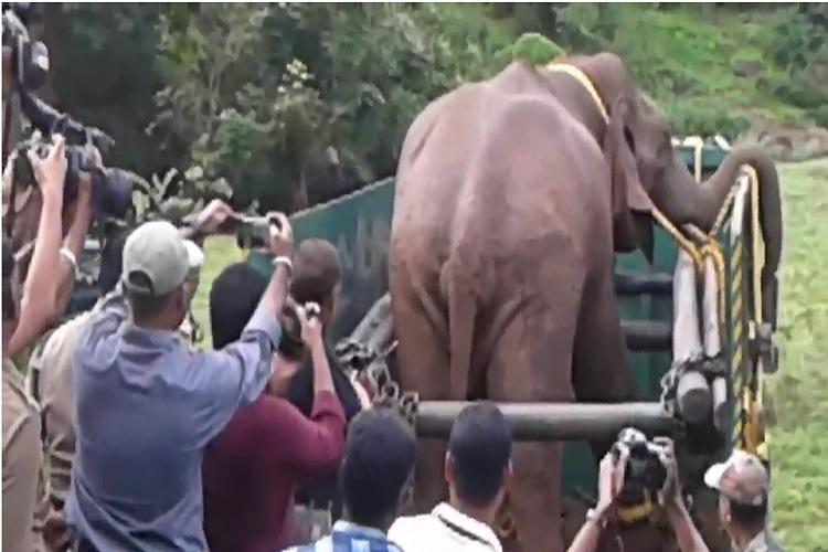 That Madukkarai rogue elephant which was captured It is dead