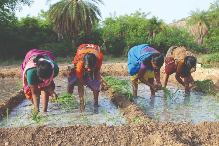 How urban organic farming in India may be working against traditional farmers