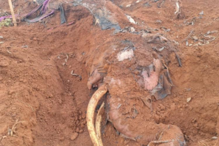Male elephant electrocuted in Ooty after coming in contact with live wire buried in wet sand