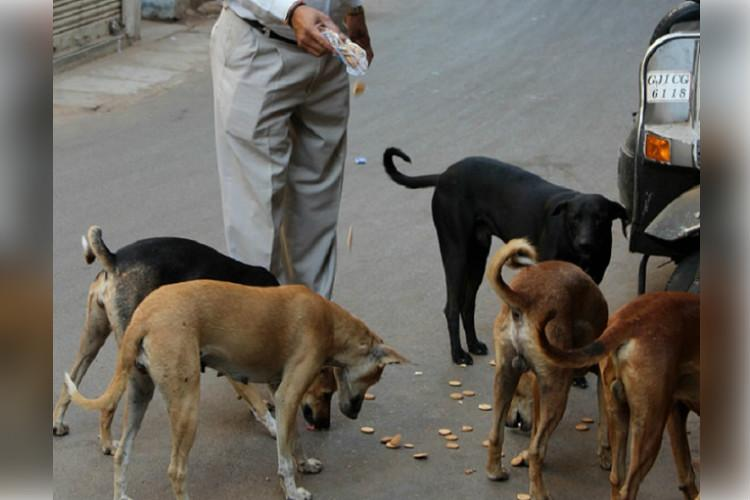 Is it legal to feed stray dogs Bluru man alleges harassment by cops for doing so