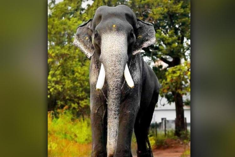 Tusker Mangalamkunnu Karnan passed away in Keralas Palakkad district on January 28th