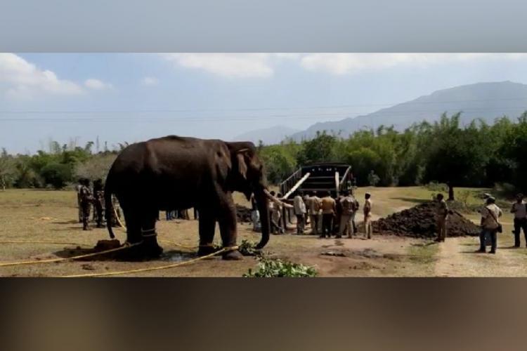 The elephant that later succumbed at Masinagudi