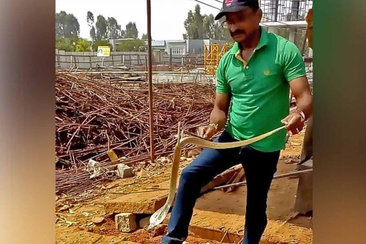 Mohan rescuing snakes in Bengaluru