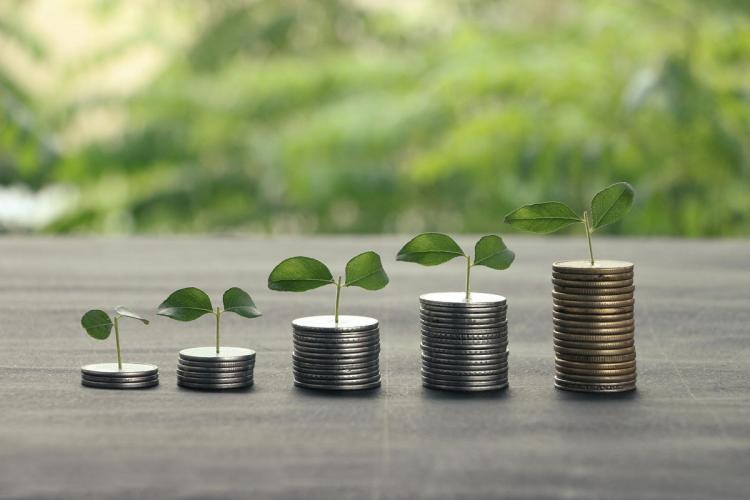 Plant growing on a stack of coins to indicate growth with fundraising