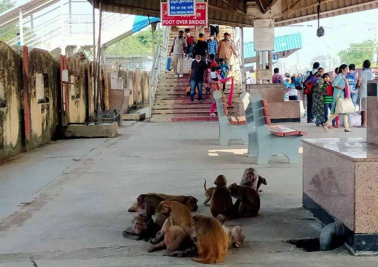Monkeys can be seen grooming thier offspring as passengers climb down the steps at a railway station