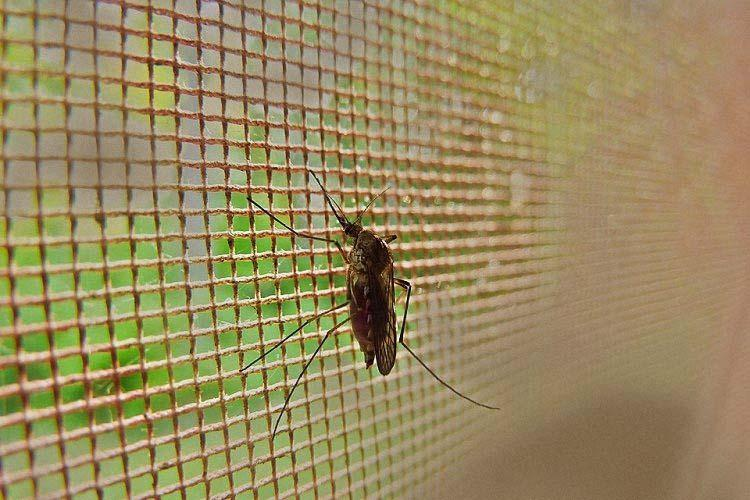1 case of West Nile Fever in Kerala How you can guard against mosquito-borne diseases