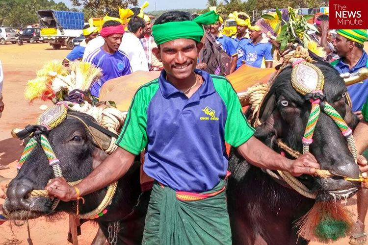 Buffaloes anatomically unfit for sport PETA to fight kambala law in SC