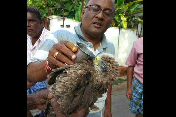 Why a bird rescuer in Kochi is all set to have a very busy Onam