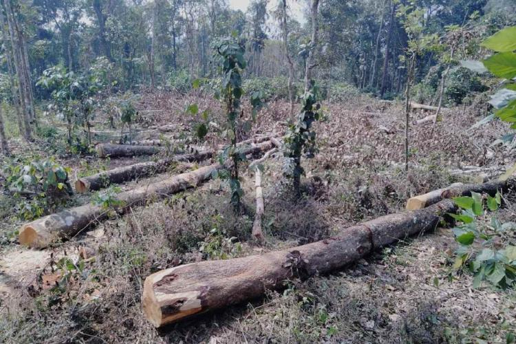 How illegal felling of centuries-old rosewood trees caused a political stir in Kerala