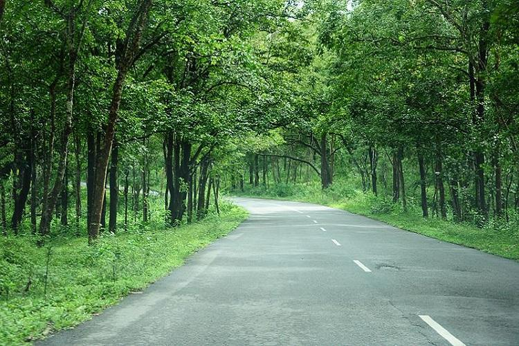 No elevated corridor in Ktakas Bandipur Tiger Reserve Centre makes stand clear
