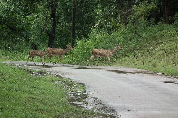 Road ecology is crucial when it comes to saving wildlife Conservationist explains