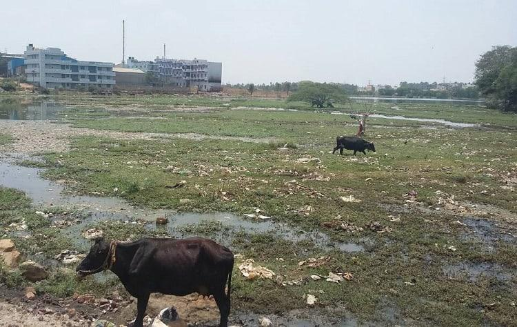 No Bellandur Lake is not the most polluted in Bengaluru Narasappanahalli Lake is worse off