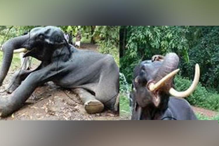 Kerala jumbo Neelakantan dies after years of neglect abuse by caretakers