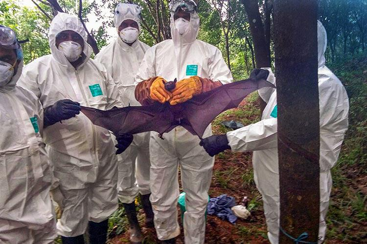 Machine Learning model developed to identify bat species that can spread Nipah
