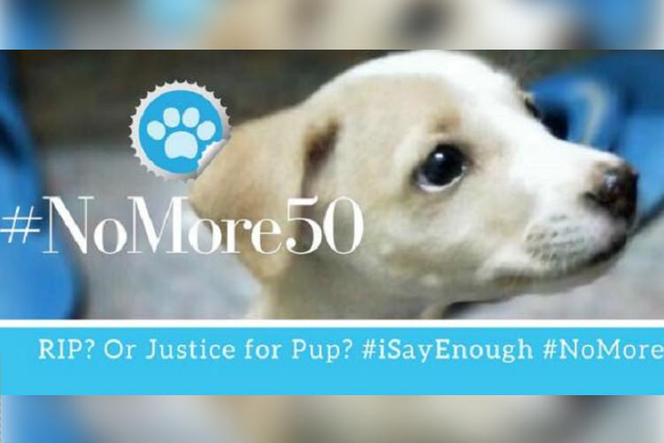 After puppy murder in TN people say no more 50 to increase animal cruelty fine