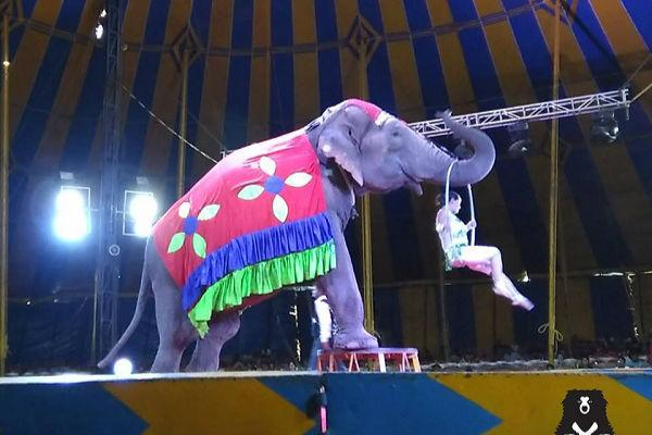 Ailing elephants rescued from circus but a cruel twist of fate forces them to go back