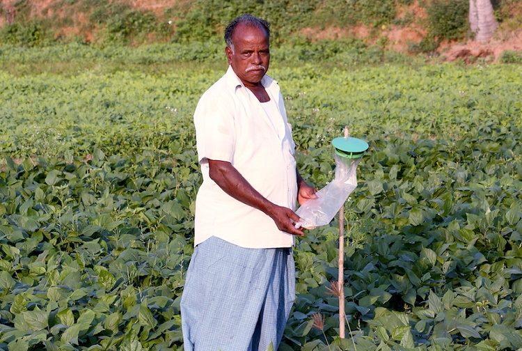 Organic farming fetches higher returns for Puducherry farmers