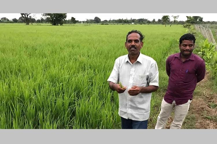 How coastal farmers in Tamil Nadu are tackling soil salinity with innovative measures