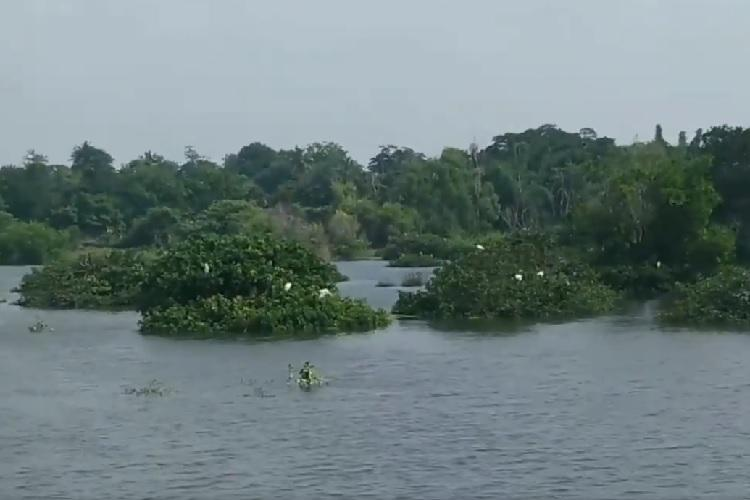 Water birds are back How forest officials revived a dried-up lake in Chennai zoo