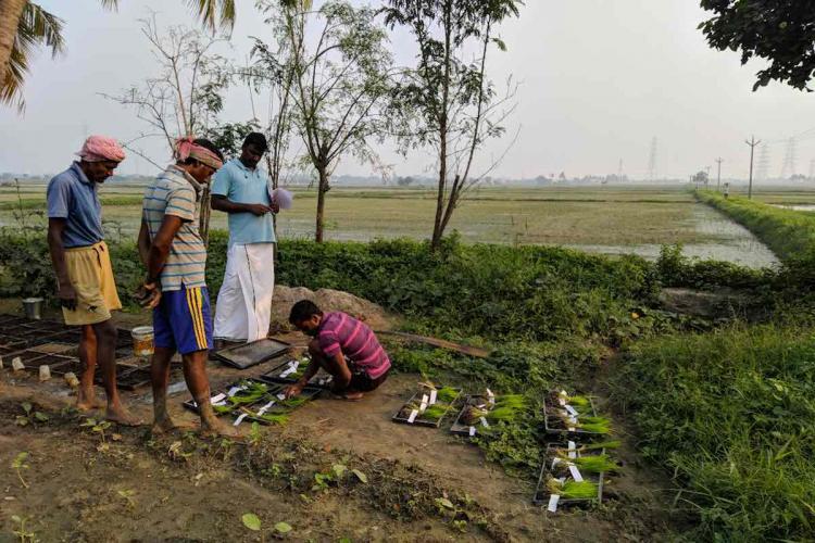 Thondaimandalam foundation Saplings tagged and readied for transplantation at Kandanapalayam Ponneri