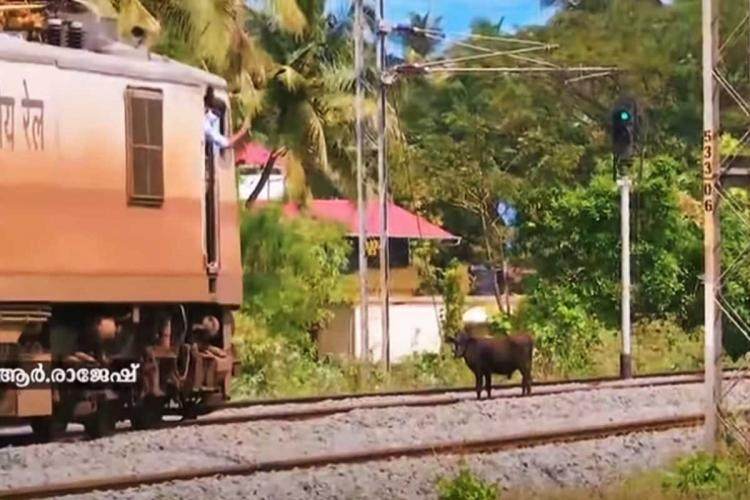 Cow standing on railway track in front of moving train