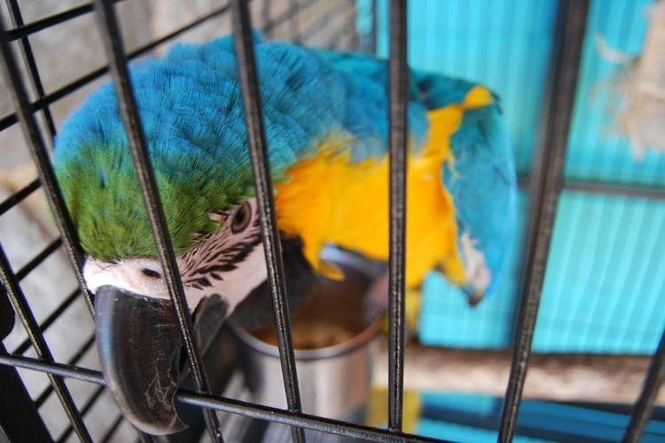 Trading in extinction How the pet trade is killing off many animal species