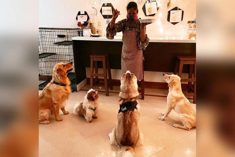 An image of dogs at The Pet Cafe, Hyderabad