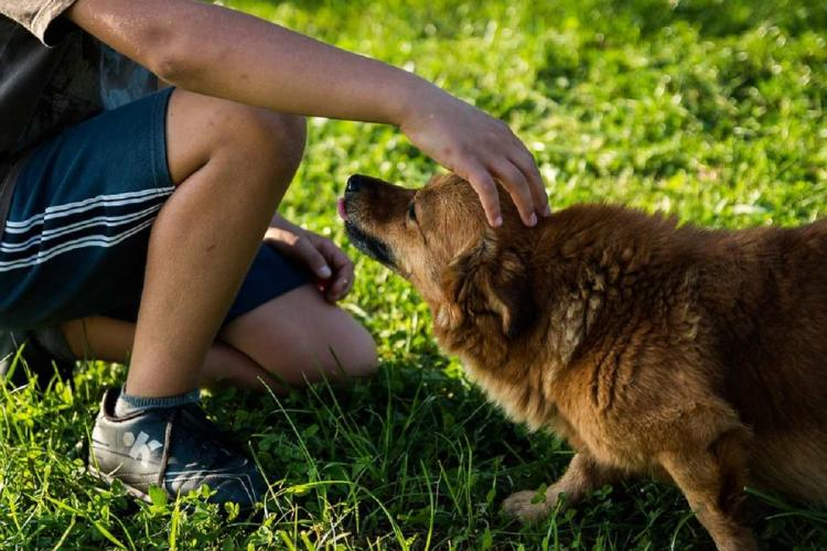 A person kneeling on grass petting a dog