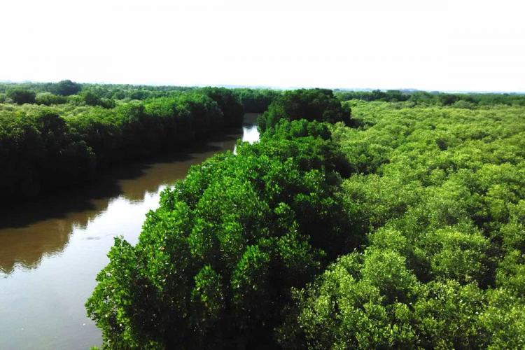 Pichavaram Mangrove Forest aerial view