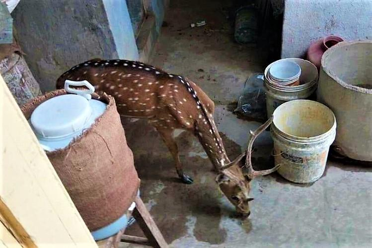 Soaring heat and dry lakes are driving animals out of Pocharam Wildlife Sanctuary