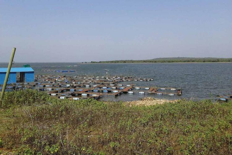 Thervoy Kandigai reservoir Five things to know about Chennais new source of water