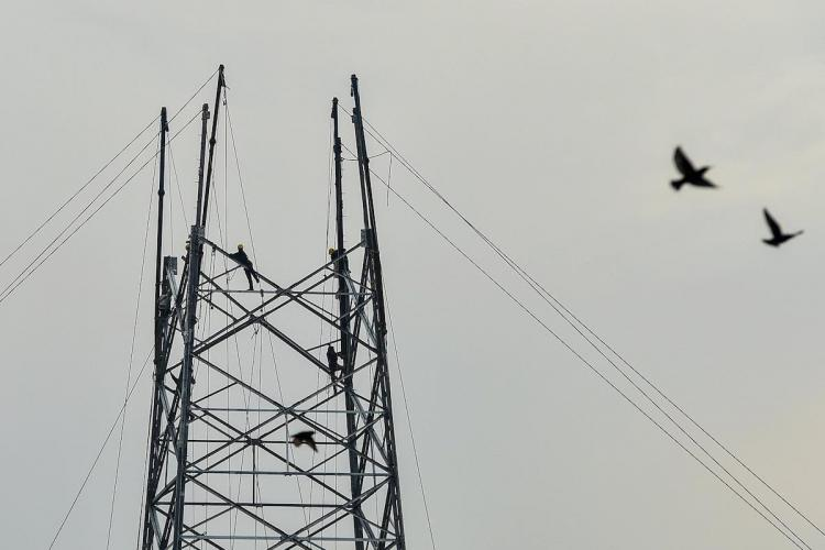 Electricity workers work for erecting high voltage towers near Yamuna at Geeta Colony in east Delhi