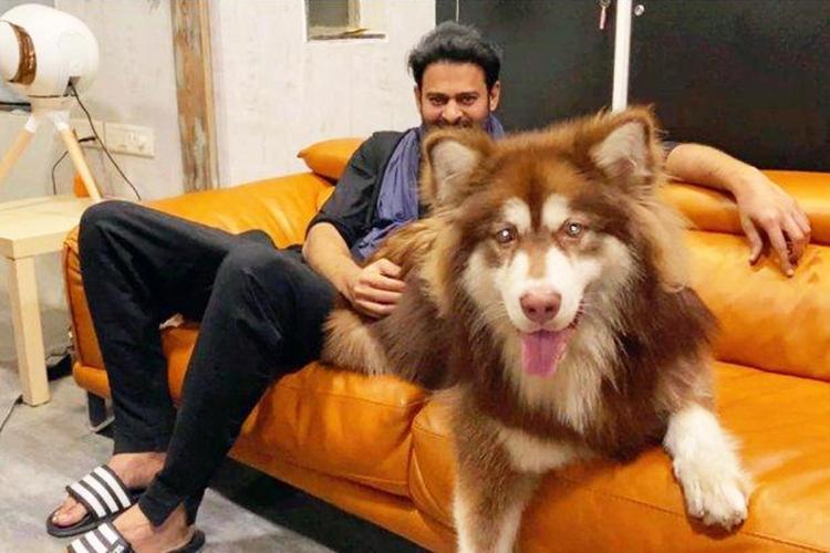 Prabhas seen sitting on an orange sofa next to Charmmys Alaskan Malamute smiling into camera