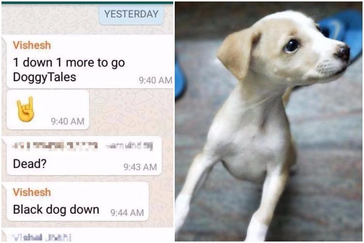Heartless animal murder in TN College student throws puppy from roof kills it