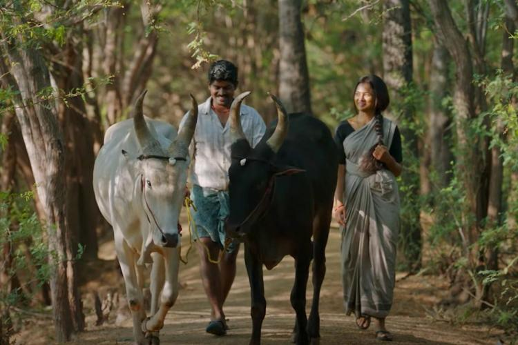 The characters walking along with two bulls