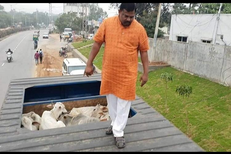 BJP MLA Raja Singh turns cow vigilante stops truck allegedly headed to slaughterhouse