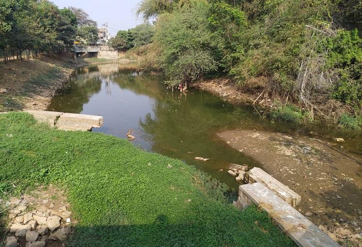 Fisheries dept dumps fishes illegally into Bengaluru lake half of them die