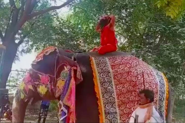 Yoga teacher Ramdev falls off an elephant and laughs video goes viral