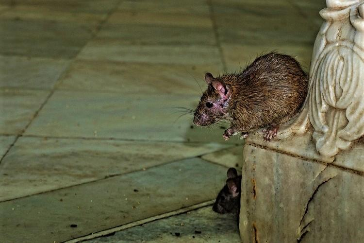 Video of rat-infested kitchen at Hyd airport goes viral cops issue warning