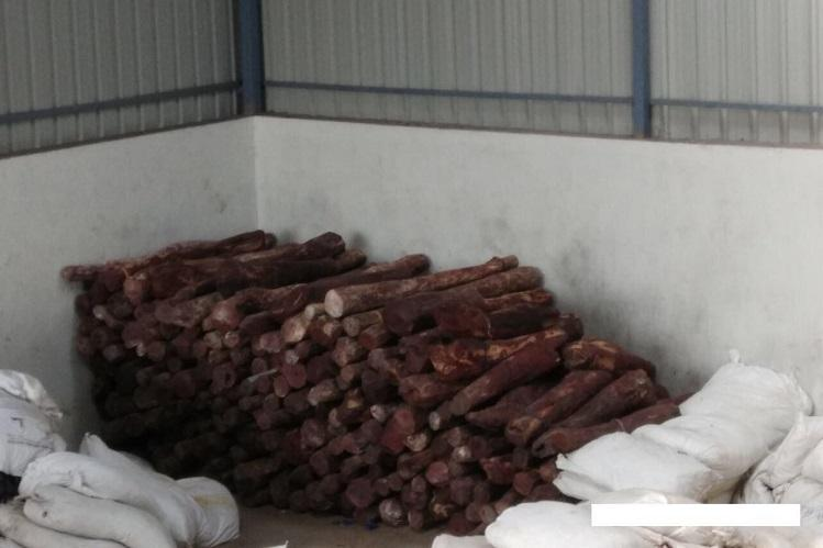 The great forest robbery How Andhras rare red sanders are smuggled around the world