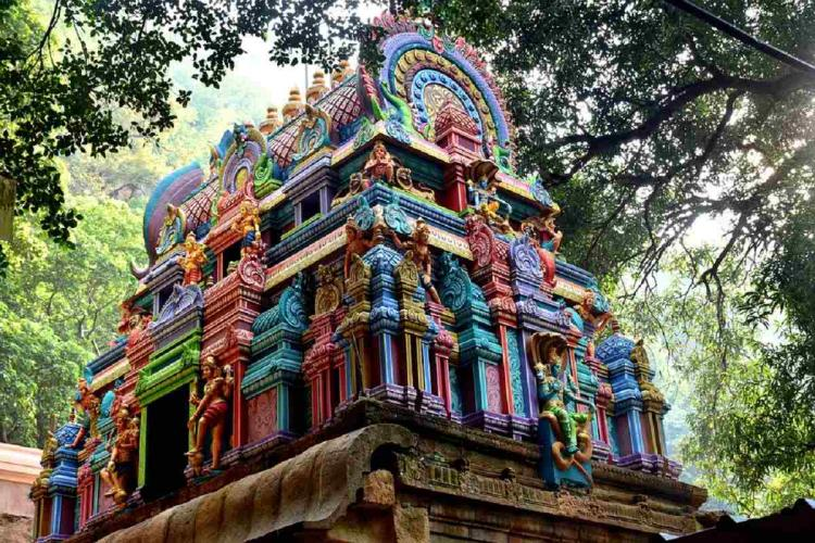 Temple gopuram nestled in between branches of a tree