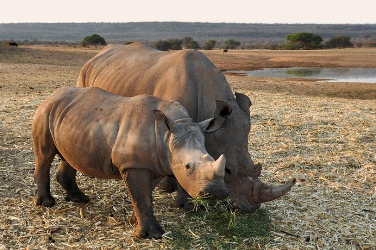 Indias militant rhino protectors are challenging traditional views of how conservation works
