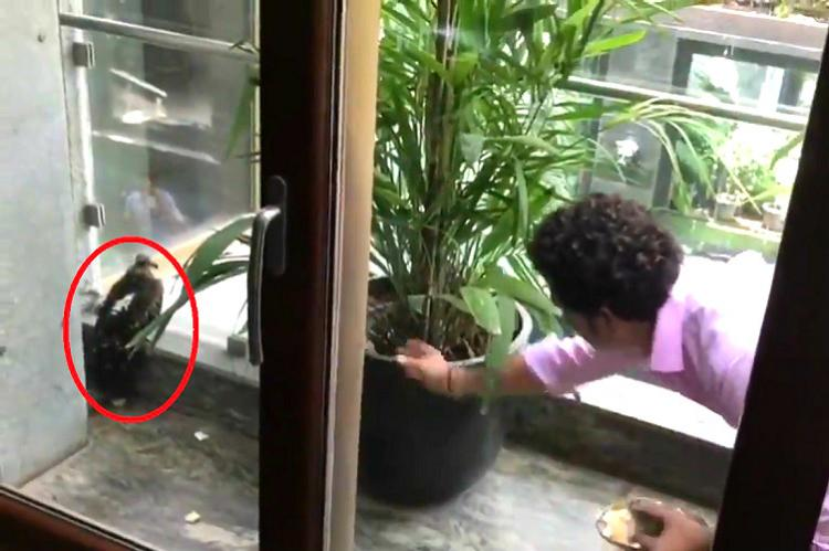 When Sachin Tendulkar helped an Injured Bird - Watch Video