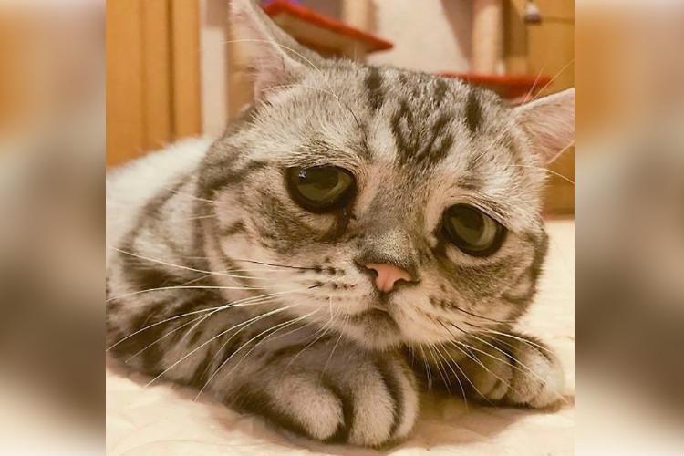 Couple bring Persian cat from Saudi purr-plexed Kochi customs send it back