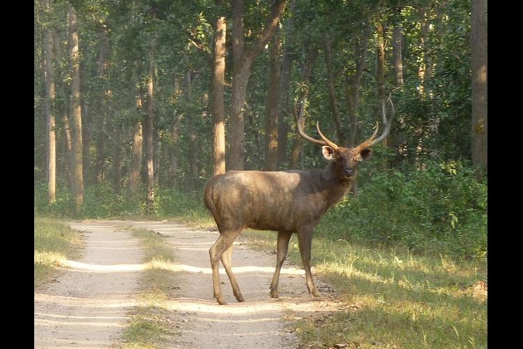 Bengaluru techies among 11 arrested for hunting sambar deer on New Years Eve
