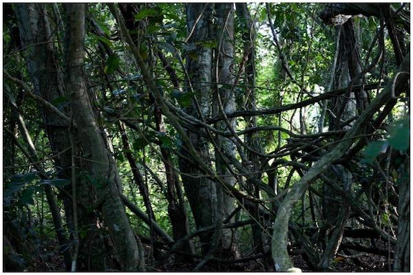 Saving a 200-year-old sacred grove in Kerala hinges on CM Pinarayis decision