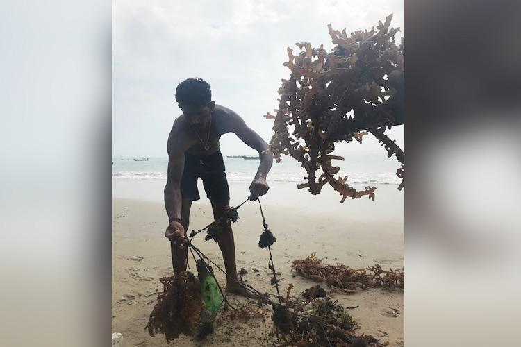 Risky work no govt support The seaweed divers of Tamil Nadus Threspuram