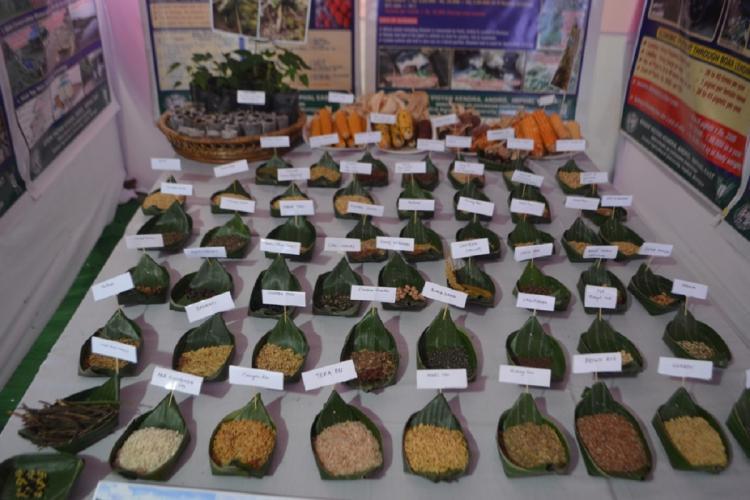 Varieties of seeds exhibited at seed festival
