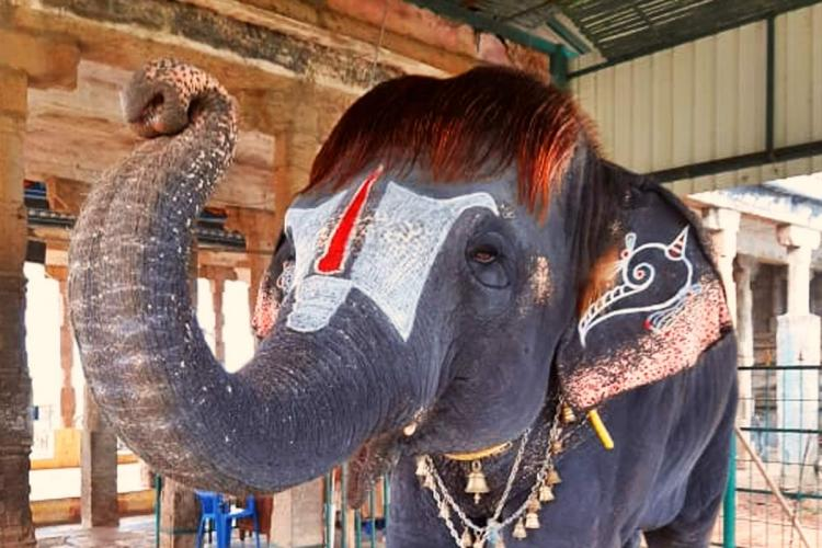 The elephant has a bob cut and lives in Mannargudi in Tamil Nadu